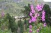 Between Zermatt and the Matterhorn, Zermatt CH