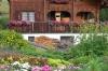 Flowers, Zermatt CH
