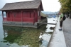 Bruce and swan - mutual admiration at the boathouse on Lake Lucern CH