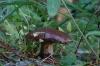 Mushroom, Hida Folk Village, Takayama, Japan