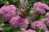 Butterfly in Kadriorg Park, Tallinn EE