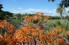 Auckland Botanic Gardens NZ