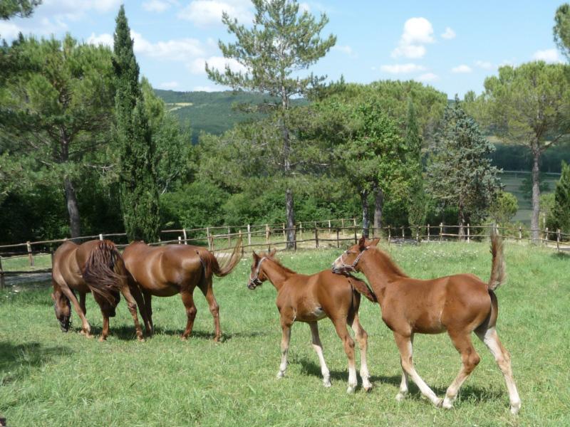 Horses & foals at Tenuta di Papena