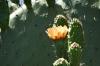 Various cacti, Cactus farm