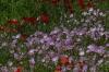 Flower walk in Wildseed Farm near Fredericksburg TX