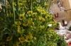 Herbs. Pisac market PE
