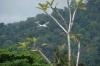 Air Berjaya landing on Tioman Island