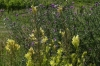 Wild flowers near the Wine Barrel viewing tower near Malá Táňa, SK