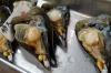 Massive mussels, Tsukiji Market, wholesale market specialising in fish, Tokyo, Japan
