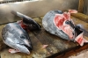 Fish heads, Tsukiji Market, wholesale market specialising in fish, Tokyo, Japan