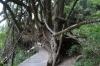Suspension Bridge Walk, Tsitsikamma National Park, South Africa