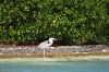 Birds in La Biosfera Sian Ka'an