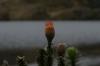 Camino de Garcia Moreno around Lake Toreadora, Cajas National Park, EC