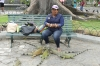 The Iguana lady in Parque Seminario, Guayaquil EC
