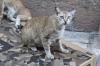Spooky cat, Valletta, Malta