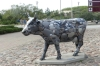 One of the famous cows at Ventspils LV