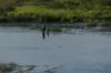 Fshing. Vetna River, Kuldīga LV