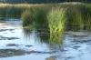 Vetna River, Kuldīga LV
