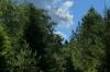 Hay field, Walk around Vihula Manor EE