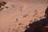 Wadi Rum - sand dune, camel family