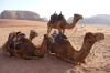 Wadi Rum - camels at the Beduoin camp
