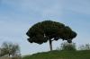 Jardí Botànic de Barcelona ES