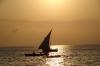Dhow sailing to fish, Zanzibar, Tanzania