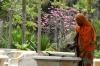 Gardener in the Forodhani Gardens, Zanzibar, Tanzania